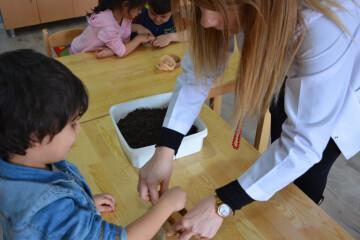 Bitkilerin Büyüme Aşamalarını Yaparak ve Yaşayarak Öğrendik.